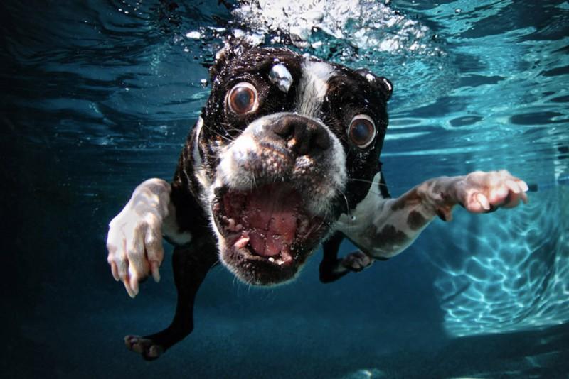 Underwater-Puppies_6