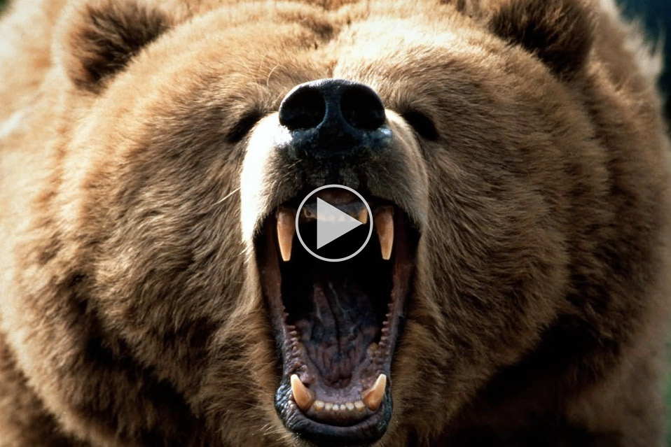 Fight-a-Bear_1