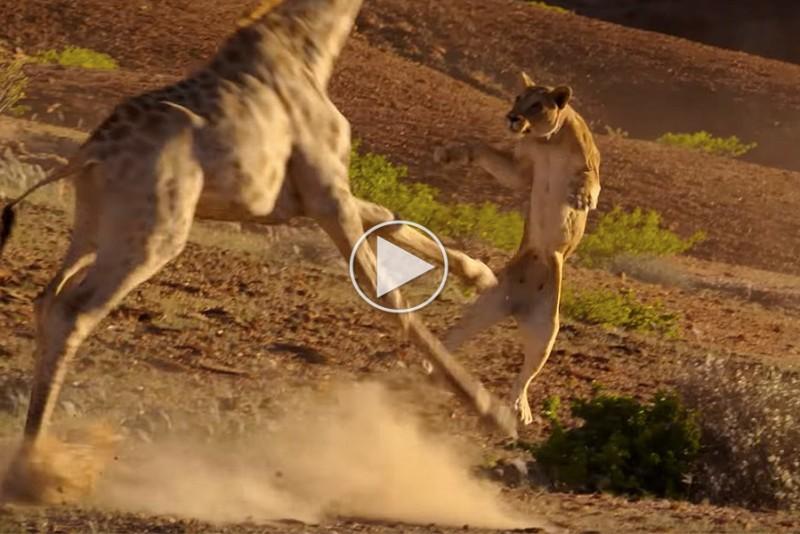 Den-nye-trailer-til-BBC's-Planet-Earth-II-er-fantastisk_1