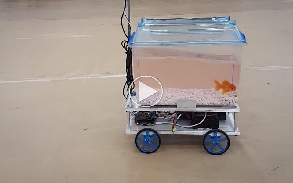 Fisk-korer-selv-sit-akvarium-med-hjul_1