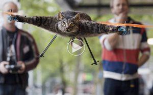 Katte-droner_1