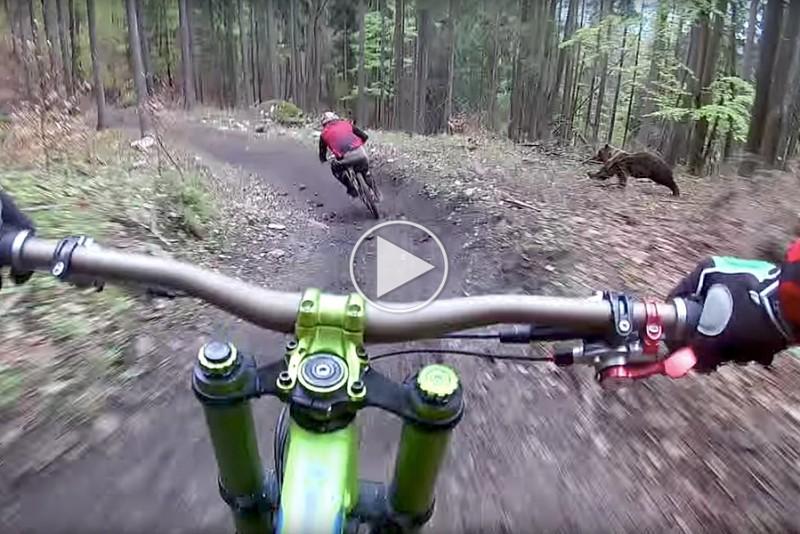 To-MTB-ryttere-møder-en-slem-overraskelse-i-skoven_1