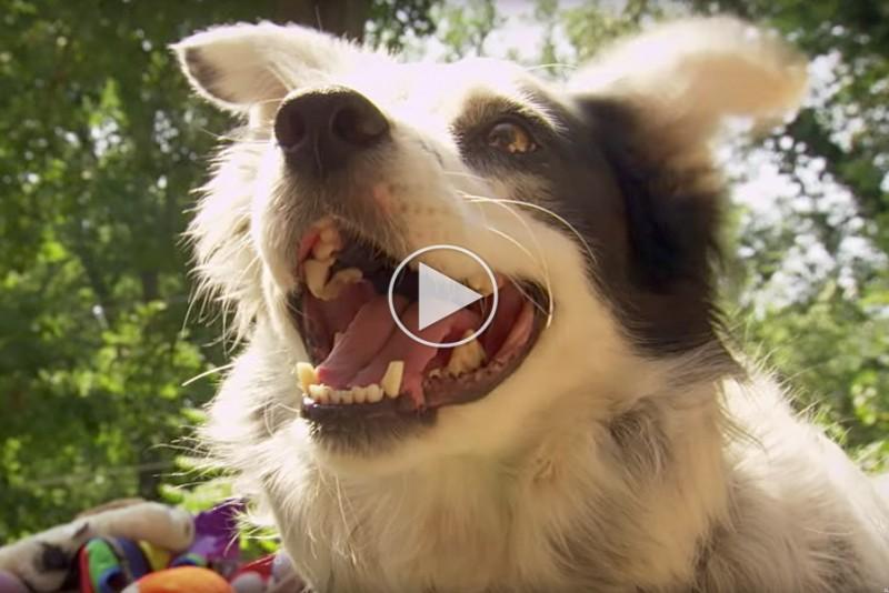 Verdens-klogeste-hund-forstar-1022-ord_1
