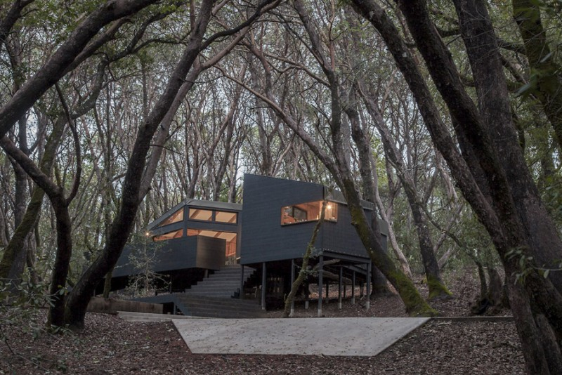 Envelope-A-D-Forest-House_1