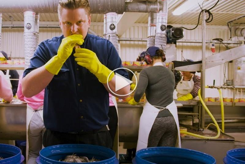 Sådan laver man Surströmming