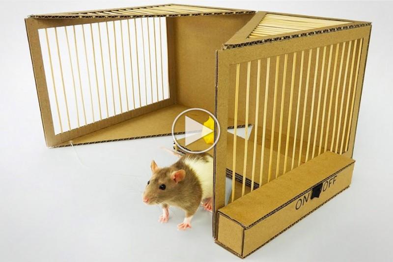 Sådan bygger du en effektiv rottefælde af pap