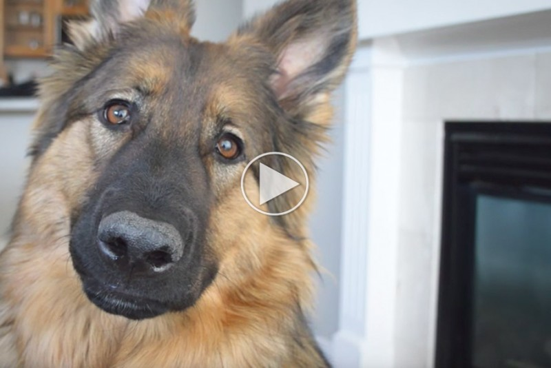 Ville du være lykkeligere, hvis du levede som en hund?