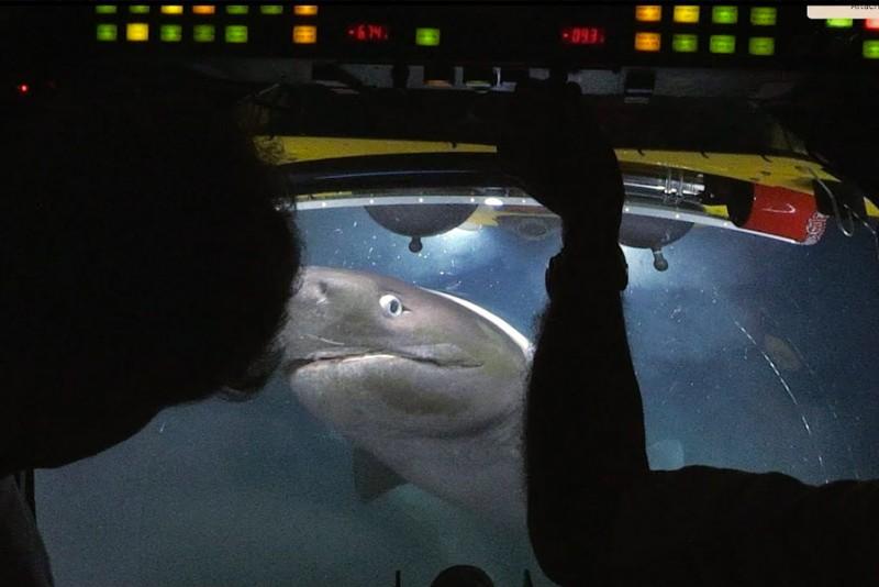 Se de fantastiske billeder, når hajer angriber en ubåd 700 meter nede i dybet